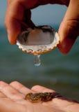 Crab revival Royalty Free Stock Photos