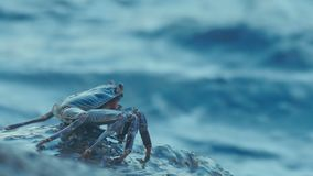 Crab on the rock at the beach stock footage