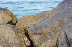 Crab on rocky shore Stock Photos