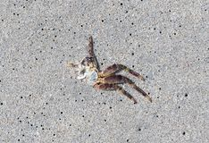Crab`s legs on the beach royalty free stock images