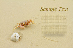 The crab on sand. Stock Photo