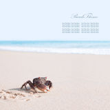 Crab on sand banner Royalty Free Stock Photo