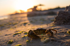 Crab on the sand beach Stock Image