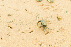 Crab on Sand Stock Photo