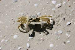 Crab sand Stock Photo