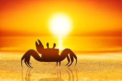 Crab on sand royalty free stock images