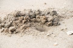 The Crab sand dug up. On beach royalty free stock images