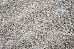 Crab Sand Hole. At the beach Royalty Free Stock Images