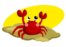Crab In the Sand Royalty Free Stock Image