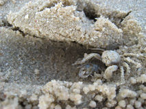 Crab at sand. Small Crab at sand in Thailand Stock Image