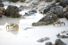 Crab on the sand at sunset Royalty Free Stock Images