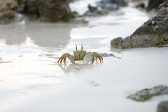 Crab on the sand at sunset Stock Image