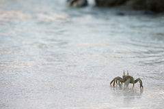Crab on the sand at sunset Royalty Free Stock Photos