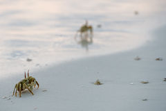 Crab on the sand at sunset Stock Photography