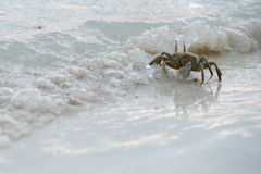 Crab on the sand at sunset Royalty Free Stock Photography