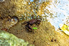 Crab on the sand in water Stock Photography