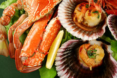 Crab And Scallops Royalty Free Stock Images
