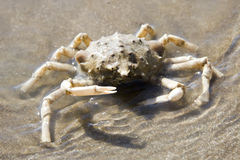 Crab in the sea Stock Photos