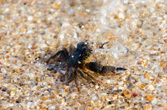 Crab. On the sea beach Stock Images