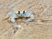 Crab in sea beach Stock Image