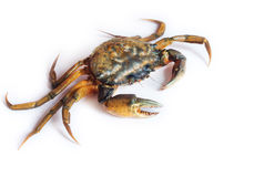 Crab stock photos