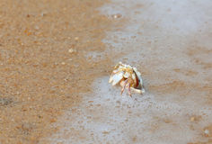Crab in seashell on the sea beach Royalty Free Stock Images