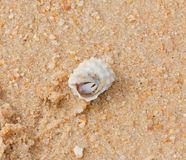 Crab in seashell on the sea beach Stock Photos