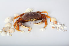 Crab With Seashells Stock Photos