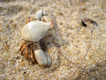 Crab series 3. Small crab carcass facing the side on fine sands in Lanjut Beach, Malaysia Stock Photos