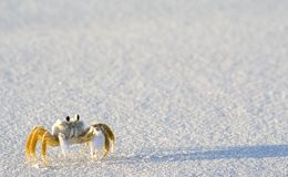 Crab Shadow Royalty Free Stock Photo