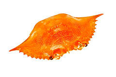 Crab Shell Royalty Free Stock Images