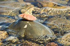 Crab shell balanced on rock in water Stock Photo