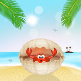 Crab in the shell on the beach. Illustration of crab in the shell on the beach Royalty Free Stock Photography