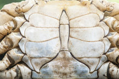 Crab shell pattern Stock Photo