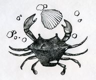 Crab, shell and some peebles. Little crab, single shell and some small peebles on the sea shore. Ink drawn sketch royalty free stock images