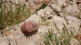 Crab shell on a stone Royalty Free Stock Photos