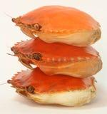 Crab Shells Royalty Free Stock Image