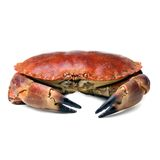 Crab shot on a white backdrop Royalty Free Stock Image