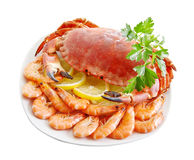 Crab with shrimp Stock Image