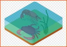 Crab shrimp isometric. Crab and shrimp under water isolated on white background. Marine creatures isometric flat vector 3d illustration Stock Photography