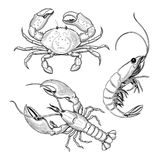 Crab, shrimp, lobster. Seafood. Vector illustration. Isolated image on white background. Vintage style royalty free illustration