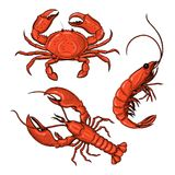 Crab, shrimp, lobster. Seafood. Vector illustration. Isolated image on white background. Vintage style stock illustration