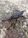 Crab sitting on a stone stock photography