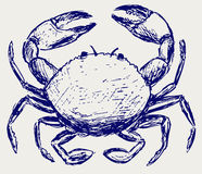 Crab sketch. Doodle style. Vector Stock Photography
