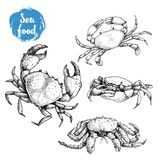 Crab sketch set. Hand drawn collection of seafood. Vector illustrations. Of different crabs stock illustration