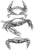 Crab sketches Royalty Free Stock Photography