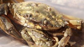 Crab with small crab Stock Photography