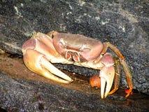 Crab. Small Grab at the beach Royalty Free Stock Photography