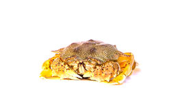 Crab. Small crab spawning , isolate white background Royalty Free Stock Image