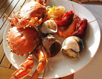 Crab and Snail. Delicious Crab and Snail.healthy royalty free stock photo